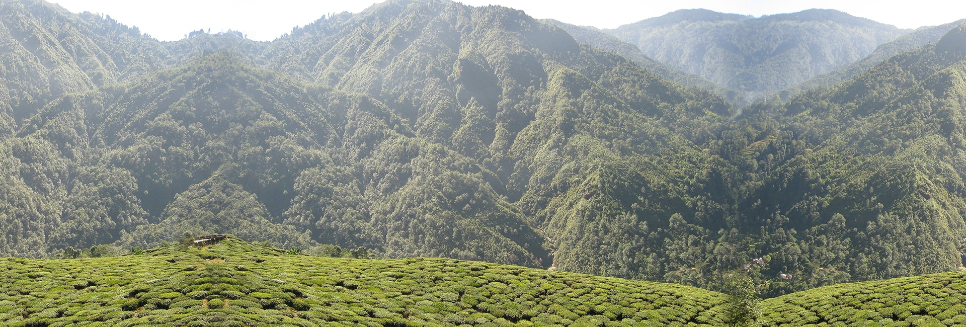 Naturally Beautiful Places in India