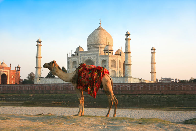 Taj Mahal with camel in front