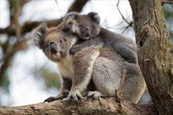 Australia - Wildlife Park